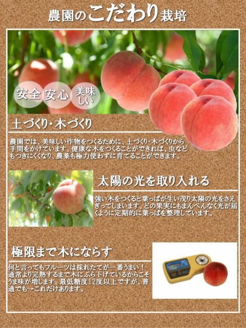 送料無料 完熟桃 和歌山県産 秀品 12玉 もも 高糖度 朝採り お中元ギフト 贈答用 家庭用 おためし