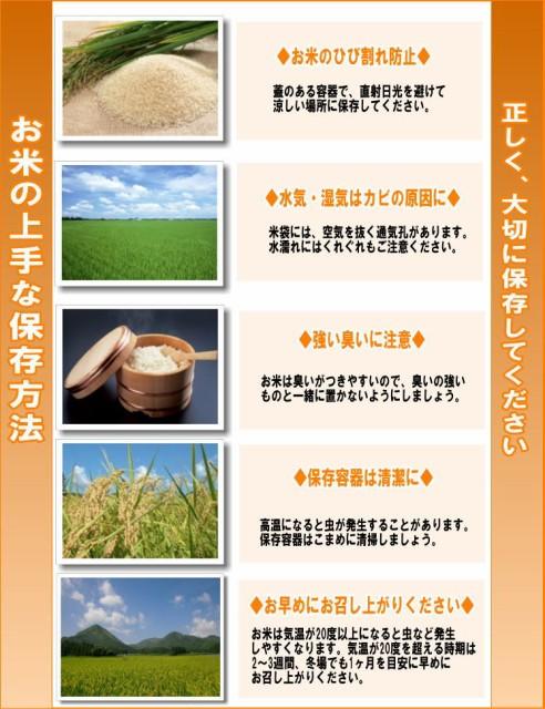 平成29年産新潟県産こしひかり10kg(5kg×2)※北海道・東北・中国・四国・九州・沖縄は別途送料かかります。米 10キロ 送料無料