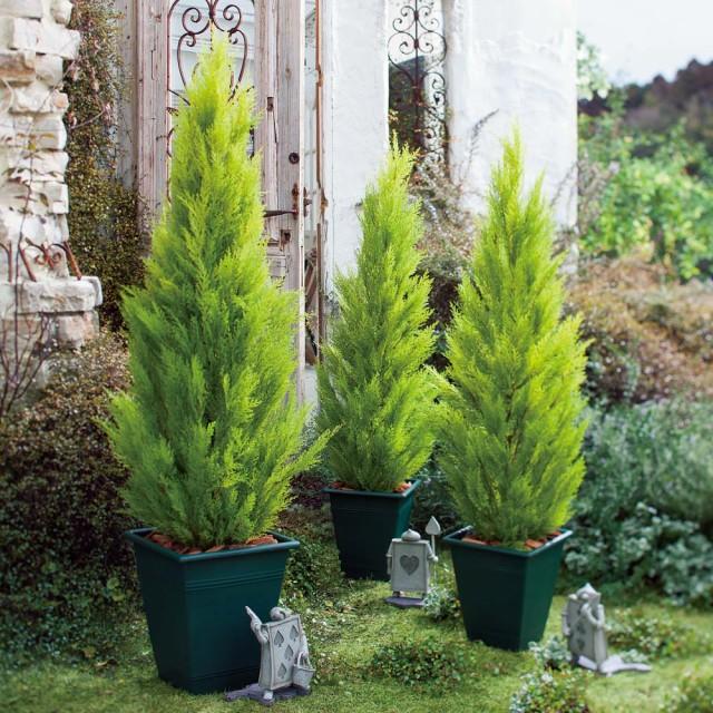 人気特価 人工観葉植物ゴールドクレスト 120cm お得な2本組 G68806, 宮崎県 97880595