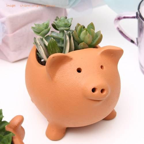 (観葉植物)私のオアシス 多肉寄せ植え アニマルテラコッタ ブタ(1鉢) 説明書付き