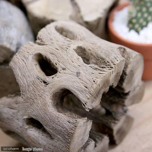 サボテンの骨 スライス状 特大(直径7.5×高さ5cm)(1個)