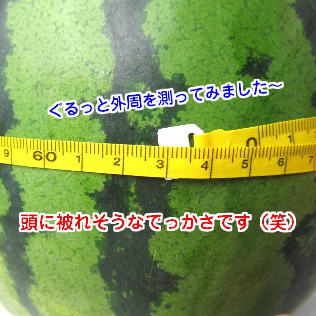 大玉すいか 熊本県産※ 秀品 大玉 2玉 1玉5kg~6kg程度