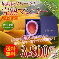 父の日 ギフト 送料無料 宮崎産完熟マンゴー1玉(大玉)専用化粧箱入り