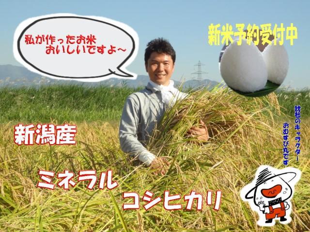 29年新潟産新米ミネラルコシヒカリ 玄米 5kg 送料無料(地域によって送料がかかります)