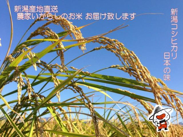 新潟県産コシヒカリ 白米 25kg 数量限定販売 送料無料(地域によって送料がかかります)