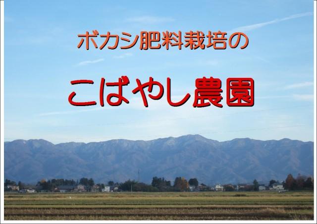 新潟県産(減農薬・減化学肥料米)発芽玄米 ミルキークイーン 20kg(10kg*2)  認証特別栽培米 平成29年産