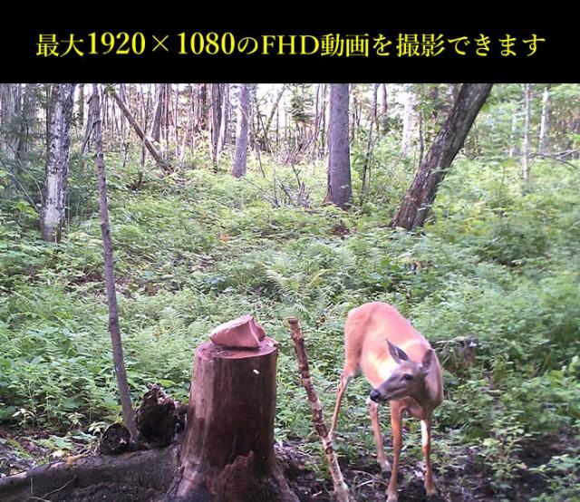 1080Pトレイルカメラ(FHD) タイムプラス撮影・録画 動体検知 32GBカード対応 不可視赤外線 日本語メニュー対応 HCD2