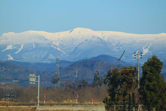 山形県飯豊町産、極上朝採りわらび10K 飯豊連峰の奥深くが産地です。ご予約順にお送りいたします。東北関東送料無料。ワラビ