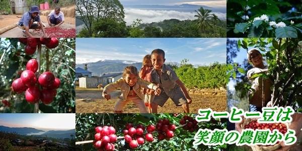 無農薬・有機栽培100%農園コーヒー 笑顔のコーヒー農園から