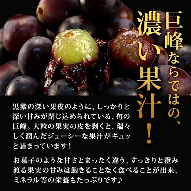 巨峰ならではの、濃い果汁しっかりと深い甘みが閉じ込められている、旬の巨峰。大粒の果実の皮を剥くと、瑞々しく潤んだジューシーな果汁がギュッと詰まっています!ミネラル等の栄養もたっぷりです♪