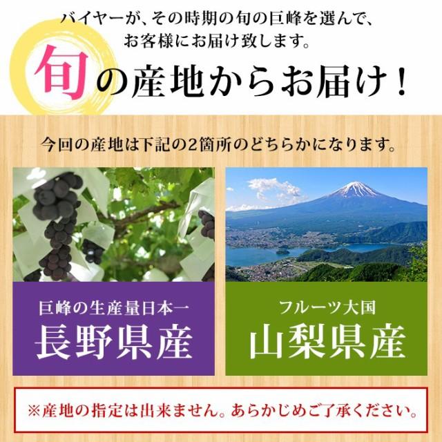旬の産地からお届け!巨峰の生産量日本一を誇る長野県産、または、フルーツ大国・山梨県産の、どちらかになります。