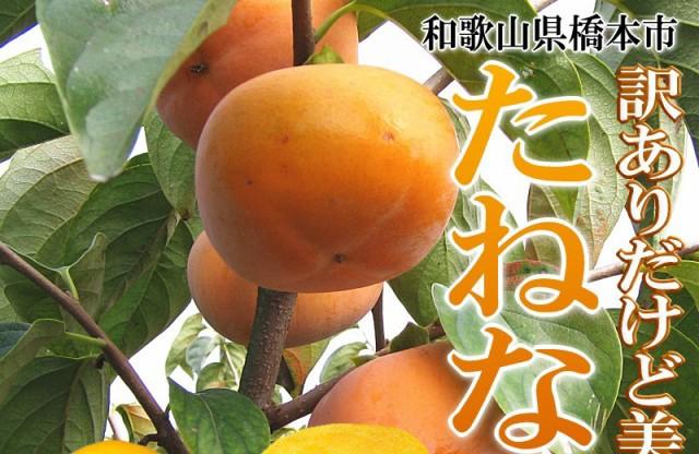 和歌山 たねなし柿 かき カキ 訳あり