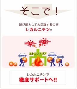 お徳用L-カルニチン(約3ヶ月分)3150円以上送料無料 サプリ サプリメント 健康食品 ダイエット L-カルニチン