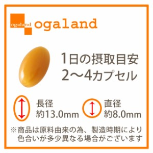 お徳用ホスファチジルコリンα(約3ヶ月分)3150円以上送料無料 健康商品 サプリメント