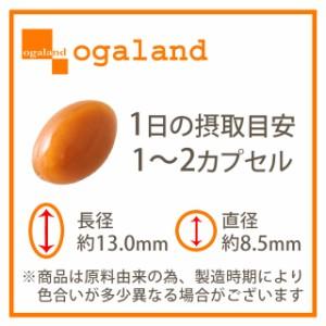 お徳用ノコギリヤシ(2個セット・約6ヶ月分)3150円以上送料無料 激安 生活習慣 シャンプー 亜鉛 リコピン ノンシリコン