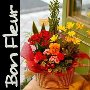 【結婚祝いの花 父の日 61】 おまかせ!季節のプランツアレンジメント2 花ギフト結婚祝いの花