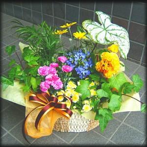 【結婚祝いの花 父の日 62】 おまかせ!オリジナルプランツアレンジメント 花ギフト結婚祝いの