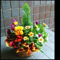 【結婚祝いの花 父の日 65】 おまかせ!定番プランツアレンジメント 花ギフト結婚祝いの花祝い