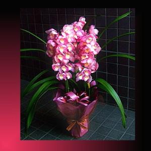 【結婚祝いの花 父の日 78】 おまかせ 旬の父の日用 洋蘭 花ギフト結婚祝いの花祝い、