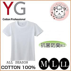グンゼ YG ワイジー コットン100% 半袖 クルーネックTシャツ 襟テープ太め M L LL