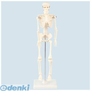 アーテック(ArTec) [009976] 人体骨格模型 42 4521718099767