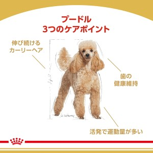ロイヤルカナン 犬用 プードル 成犬用 3kg 3182550765206 ジップ付