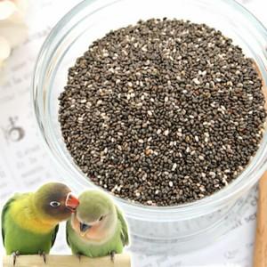 小鳥のためのチアシード 60g 鳥 フード 餌 おやつ 無添加 無着色
