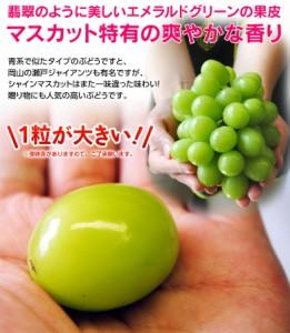 ぶどう ブドウ 葡萄 送料無料 山梨 シャインマスカット 2房 (合計 約800g) ※常温または冷蔵