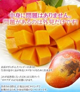 マンゴー 訳あり 沖縄 完熟 マンゴー 大ボリューム 約1.5kg(3〜6玉) 常温・送料無料
