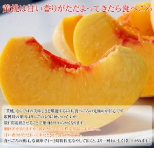 桃 もも 送料無料 山形 高嶋さんグループの黄桃 袋がけ 特秀品 約2キロ(5〜10玉)