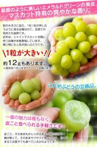 ブドウ ぶどう 送料無料 長野県産 「シャインマスカット」 2房 計約800g 常温
