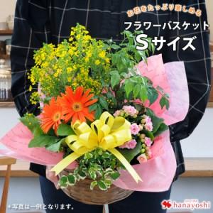 季節のおまかせ花鉢とグリーンの寄せ入れSサイズ【フラワーバスケット 花 ギフト 誕生日 プレゼント 母 女性 祖母 お花 おしゃれ お祝い