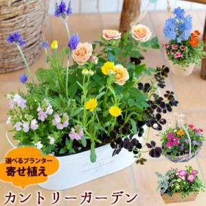 【送料無料】【寄せ植え】プランターが選べる♪季節のおまかせカントリーガーデン【お花 ギフト  誕生日プレゼント 女性 友達 花 お誕生
