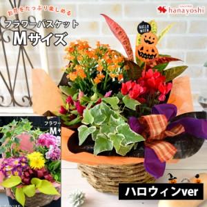 即日発送対応 季節のおまかせ花鉢とグリーンの寄せ入れ Mサイズ 花 誕生日 プレゼント 女性 母 祖母 お祝い 鉢花 ギフト フラワーギフト