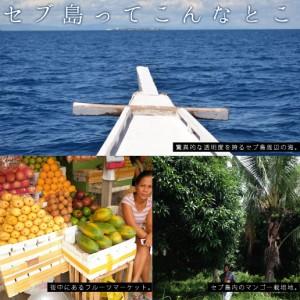 送料無料 不揃い セブ島 半生ドライマンゴー 1kg ドライフルーツ 果物 訳あり おつまみ おやつ 自然の館