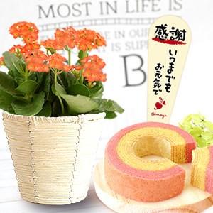 カランコエ「オレンジ」&苺バウム