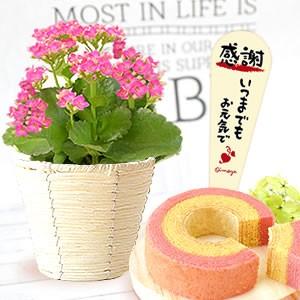 カランコエ≪ピンク≫&苺バウム