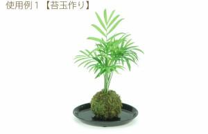 【園芸資材】お値打ち青苔(50g)苔玉作りに♪ 鉢物にも装飾してワンランク上のグリーンに!