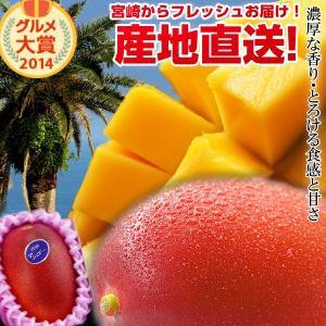 宮崎完熟マンゴー大玉1玉 宮崎 南国 フルーツ 果物 ギフト 父の日 贈り物 プレゼント 完熟 マンゴー 地元 送料無料
