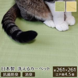 ペット ラグ 洗える 粗相 カーペット 犬 猫 ラグ  江戸間4.5畳  約 261 × 261    cm 水をはじく 汚れ にくい い草風   防ダニ   日本