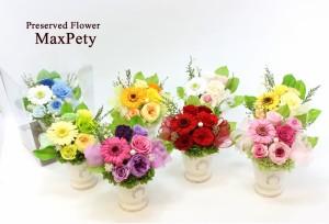 【送料無料】プリザーブドフラワー ドームアレンジ 母の日ギフト 母の日 お花 4カラー