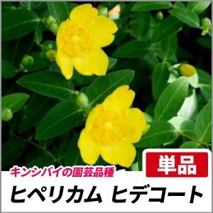 ヒペリカム ヒデコート 単品 常緑 アレンジメント グランドカバー