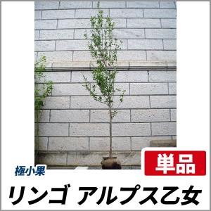 リンゴ アルプス乙女 樹高1.8~2.0m前後(根鉢含まず) 単品 落葉 果樹 庭木 シンボルツリー ミニリンゴ 林檎の画像