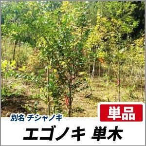 エゴノキ 単木 樹高1.8~2.0m前後(根鉢含まず) 単品 落葉 植木 庭木 シンボルツリー チシャノキの画像