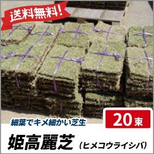姫高麗芝 20束セット 芝生 グランドカバー 高麗芝の選抜種 細葉 送料無料の画像