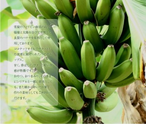 <バナナチップス 300g> ココナッツオイル ばなな 送料無料