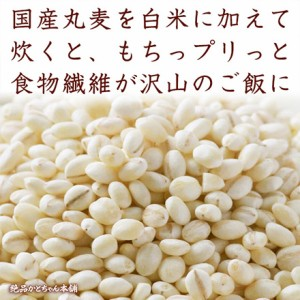 丸麦 500g 厳選国産 定番サイズ 送料無料