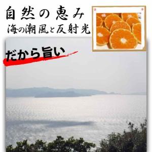 みかん 訳あり 和歌山産 5kg 送料無料 有田みかん