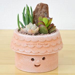 【送料無料】多肉植物寄せ植え ニコニコプランター(テラコッタ鉢)