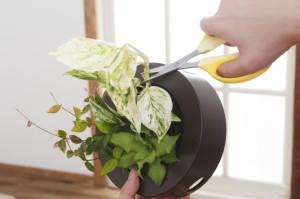 土を使わない壁掛け観葉植物 ミドリエデザイン FRAMEアイボリー17Y4